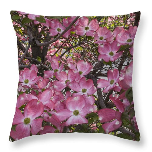 Dogwood Throw Pillow featuring the photograph Full Bloom by Idaho Scenic Images Linda Lantzy