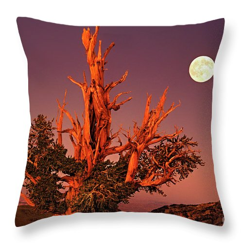 North America Throw Pillow featuring the photograph Full Moon Behind Ancient Bristlecone Pine White Mountains California by Dave Welling