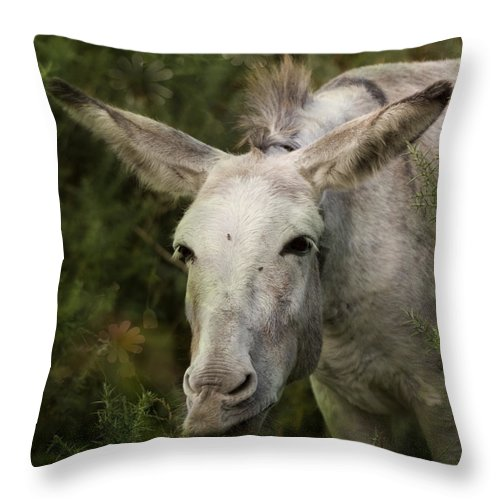 Donkey Throw Pillow featuring the photograph Funky Donkey by Angel Ciesniarska