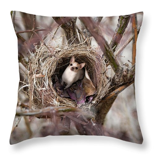 Chihuahua Throw Pillow featuring the photograph Funny Little Bird by Mary Raderstorf