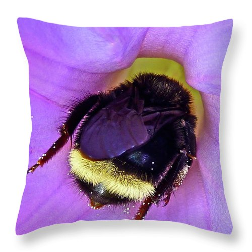 Insect Throw Pillow featuring the photograph Fur Skirt by Diana Hatcher
