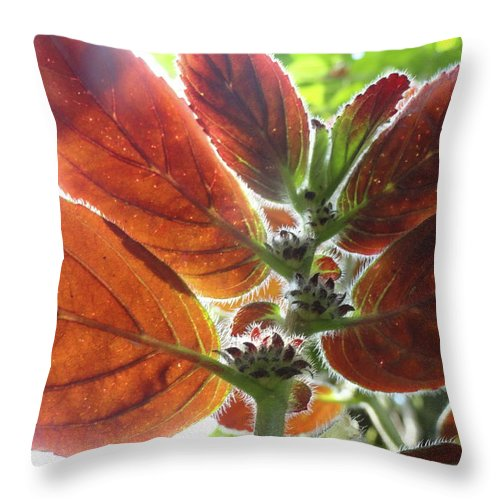 Red Throw Pillow featuring the photograph Furry Flora 2 by Trish Hale
