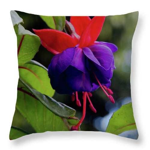 Flowers; Wildflowers; Ecuador; Tropical; Purple; Nature Throw Pillow featuring the photograph Fuschia by Kathy McClure