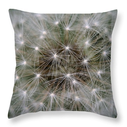 Dandelion Throw Pillow featuring the photograph Fuzzy by Angela Rath