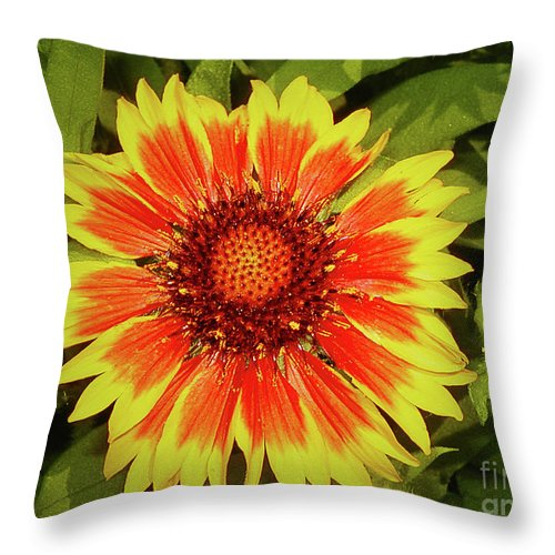 Gaillardia. Gaillardia Photography Throw Pillow featuring the photograph Gaillardia by Laura Brightwood