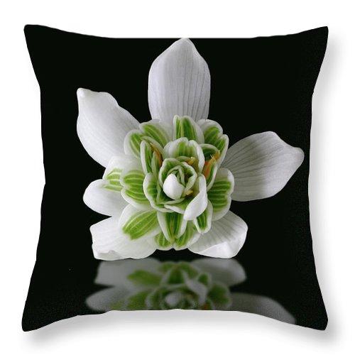 Galanthus Nivalis Throw Pillow featuring the photograph Galanthus Nivalis Flore Pleno by John Edwards
