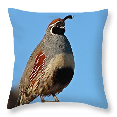 Quail Throw Pillow featuring the photograph Gambel's Quail On Sunny Perch by Max Allen