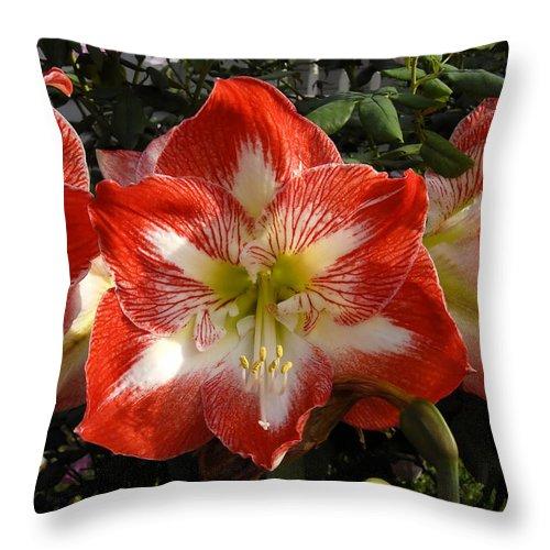 Garden Throw Pillow featuring the photograph Garden Flowers by David Lee Thompson