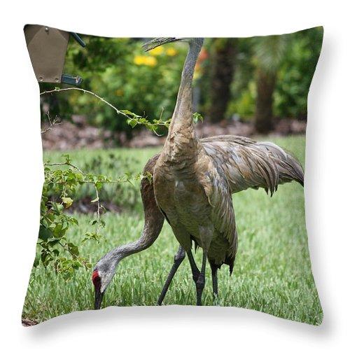 Garden Throw Pillow featuring the photograph Garden Sandhills by Carol Groenen