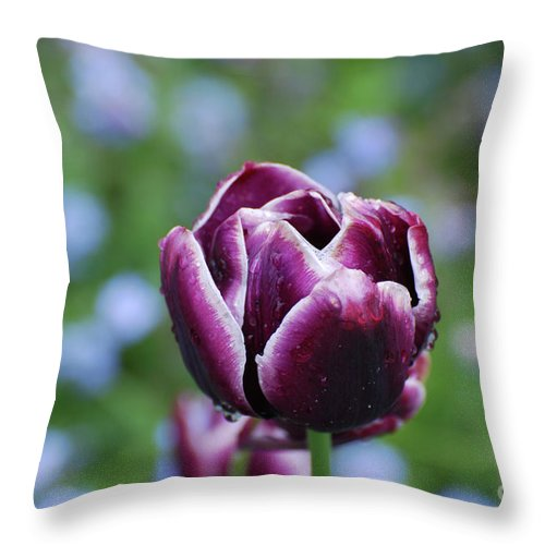 Tulip Throw Pillow featuring the photograph Garden Tulip With Rain Drops On A Spring Day by DejaVu Designs