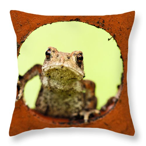 Toad Throw Pillow featuring the photograph Garden Visitor by Silke Magino