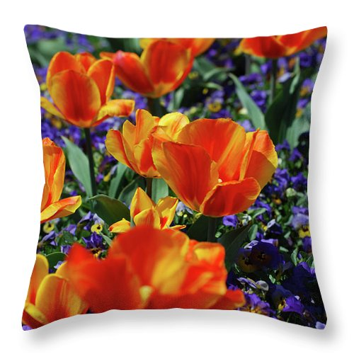 Tulip Throw Pillow featuring the photograph Garden With Blooming Yellow And Red Tulip Blossoms by DejaVu Designs