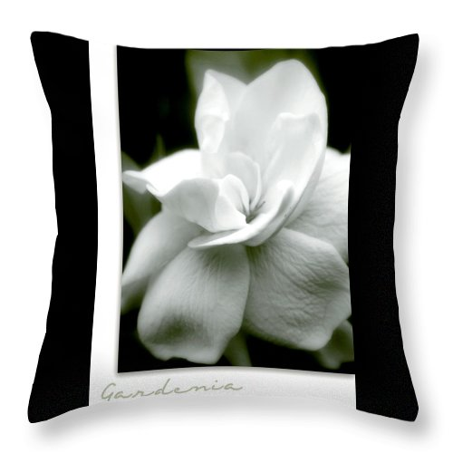 Flower Throw Pillow featuring the photograph Gardenia by Holly Kempe