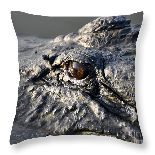 Alligator Throw Pillow featuring the photograph Gator Gaze by Al Powell Photography USA