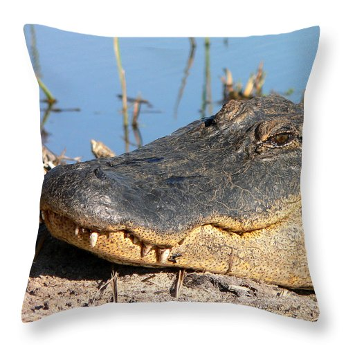 Alligator Throw Pillow featuring the photograph Gator Grin by Al Powell Photography USA