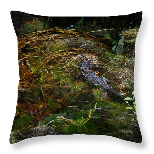 Everglades Throw Pillow featuring the photograph Gator Swamp by Joseph G Holland