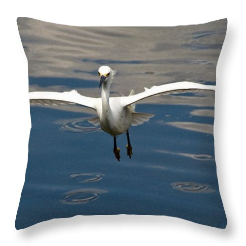 Snowy Egret Throw Pillow featuring the photograph Gear Down by Christopher Holmes