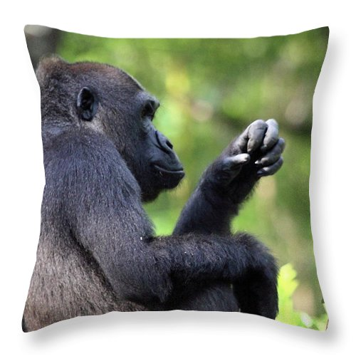 Animal Throw Pillow featuring the photograph Gee What Should I Make For Dinner by Mary Haber