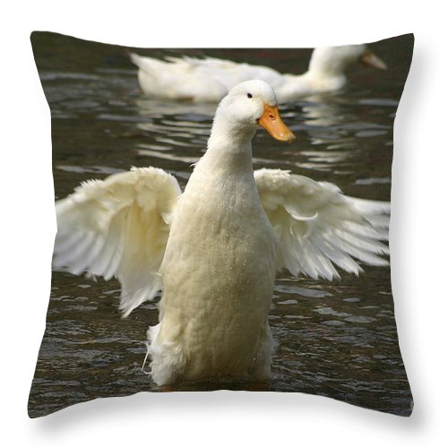 Ducks Throw Pillow featuring the photograph Geese In The Water by Danny Yanai