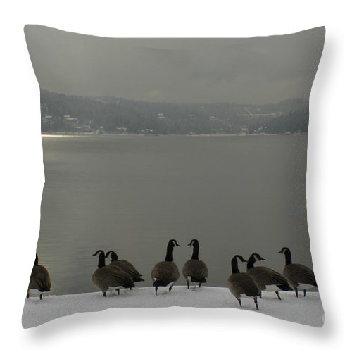 Geese Throw Pillow featuring the photograph Geese On The Edge by Idaho Scenic Images Linda Lantzy