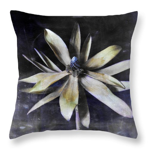 Flora Throw Pillow featuring the photograph Genus Protea by Wayne Sherriff
