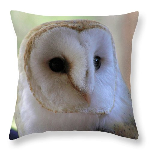 Barn Throw Pillow featuring the photograph George by Louise Magno