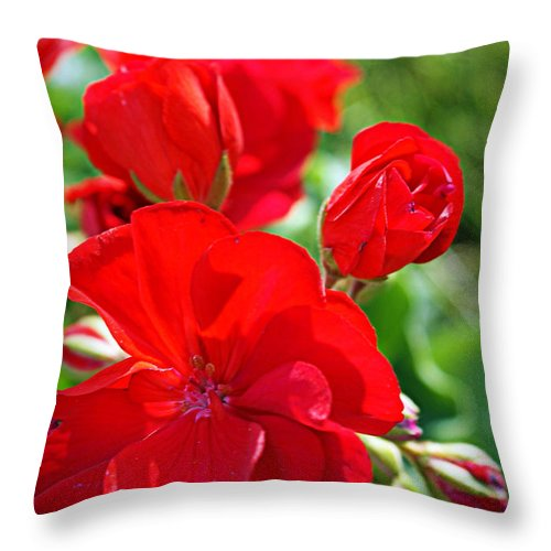 Red Throw Pillow featuring the photograph Geraniums by Cricket Hackmann