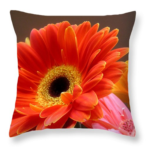 Nature Throw Pillow featuring the photograph Gerbera Daisies - Luminous by Lucyna A M Green