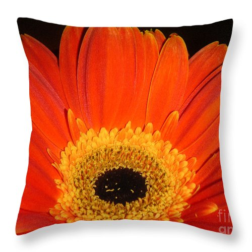 Nature Throw Pillow featuring the photograph Gerbera Daisy - Glowing In The Dark by Lucyna A M Green