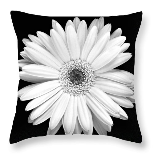 Gerber Throw Pillow featuring the photograph Single Gerbera Daisy by Marilyn Hunt