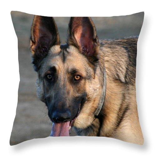 Animal Throw Pillow featuring the photograph German Shepherd 5 by David Dunham