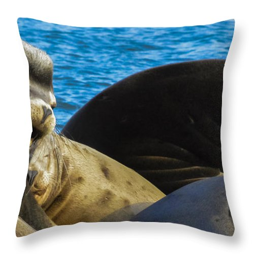 Throw Pillow featuring the photograph Get Off My Back by Shannon West