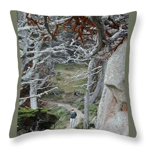 Lichens Throw Pillow featuring the photograph Ghost Trees by Douglas Barnett