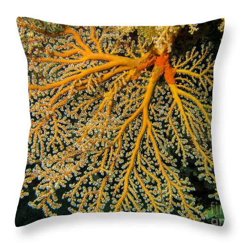 Coral Throw Pillow featuring the photograph Giant Coral Polyp by Dan Norton