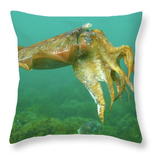 Cuttlefish Throw Pillow featuring the photograph Giant Cuttlefish by Bruce J Robinson