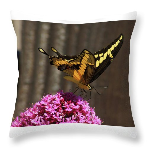 Butterfly Throw Pillow featuring the photograph Giant Swallowtail by Lorenzo Williams