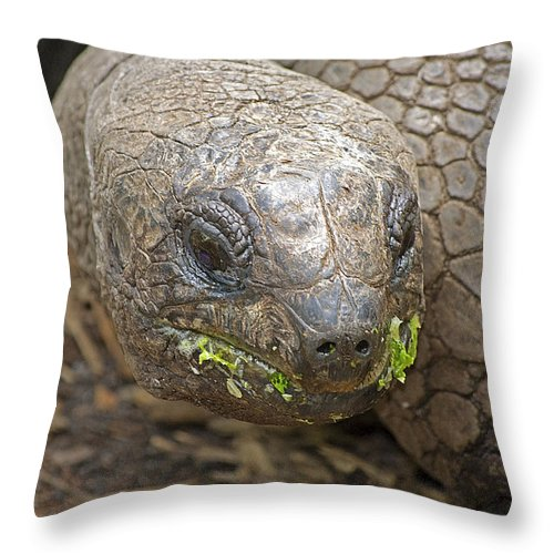 Tortoise Throw Pillow featuring the photograph Giant Tortoise by Kenneth Albin