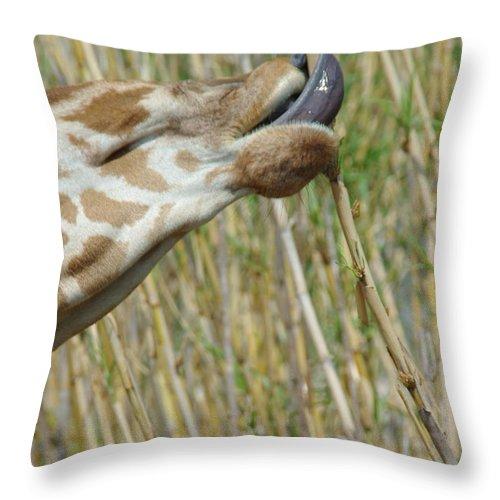 Giraffe Throw Pillow featuring the photograph Giraffe Feeding 2 by Robyn Stacey