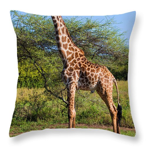 Giraffe Throw Pillow featuring the photograph Giraffe On Savanna. Safari In Serengeti by Michal Bednarek