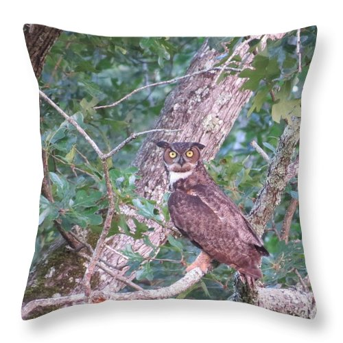 Great Horned Owl Throw Pillow featuring the photograph Give A Hoot by Charles Green