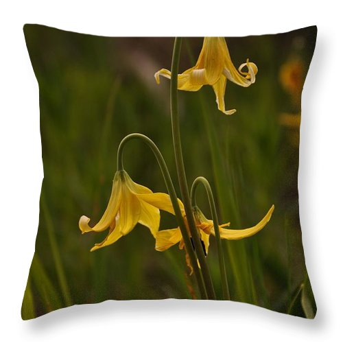 Yellowstone National Park Throw Pillow featuring the photograph Glacier Lilly by Frank Madia
