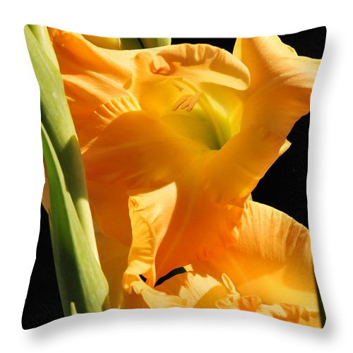 Gladiola Throw Pillow featuring the photograph Gladiola by Michelle DiGuardi