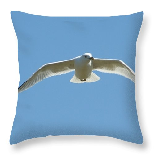 Gift Throw Pillow featuring the photograph Gliding by Barbara S Nickerson