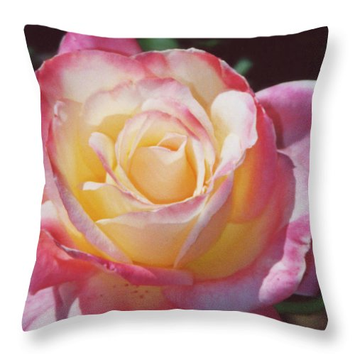 Throw Pillow featuring the photograph Glorious Pink Rose by Heather Kirk