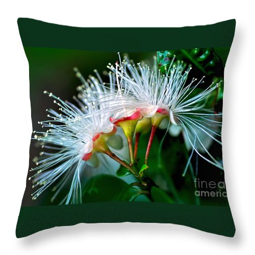 Photography Throw Pillow featuring the photograph Glowing Needles by Kaye Menner