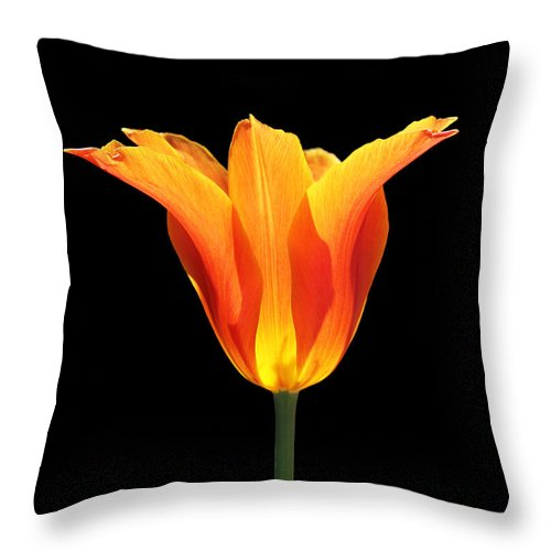 Tulip Throw Pillow featuring the photograph Glowing Orange Tulip Flower by Jennie Marie Schell