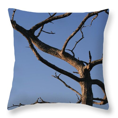Tree Throw Pillow featuring the photograph Gnarly Tree by Nadine Rippelmeyer