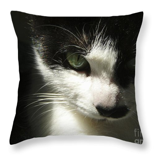Cat Eyes Throw Pillow featuring the photograph Go Ahead Make My Day by Kristine Nora