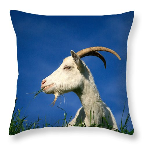 Animals Throw Pillow featuring the photograph Goat by Gaspar Avila
