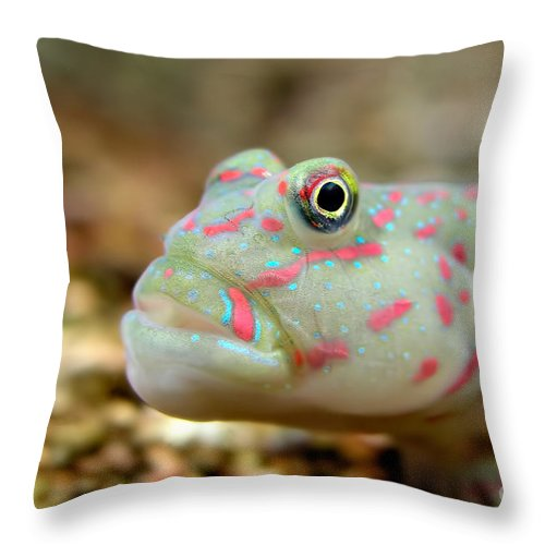 Animals Throw Pillow featuring the photograph Pink Spotted Watchman Goby by Joerg Lingnau